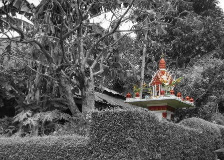 Selective Colouring of a photo using PaintShop Pro